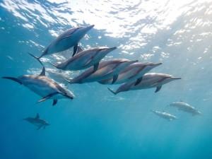 Delfines en el océano
