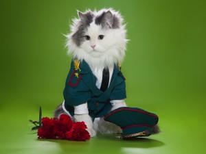 Un gato de uniforme