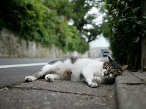 Gato tumbado junto a una carretera