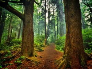 Camino en un bosque