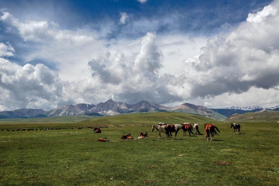 Manada de caballos pastando en la hierba fresca