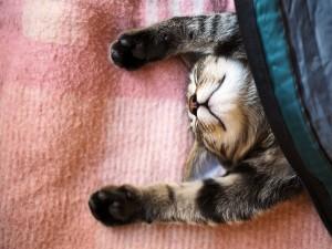 Un gato durmiendo cómodamente