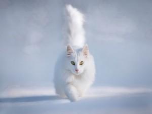 Un hermoso gato blanco caminando en la nieve