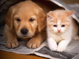 Perro y gato sobre el periódico