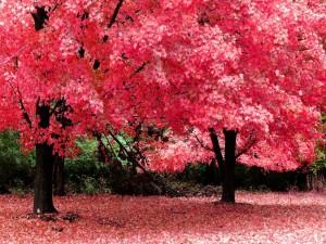 Bonitos árboles otoñales