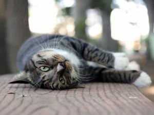 Un gato descansando