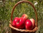 Manzanas rojas brillantes en una cesta