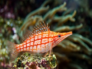 Curioso pez en el fondo del mar