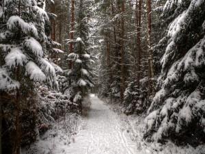 Camino en el bosque cubierto de nieve
