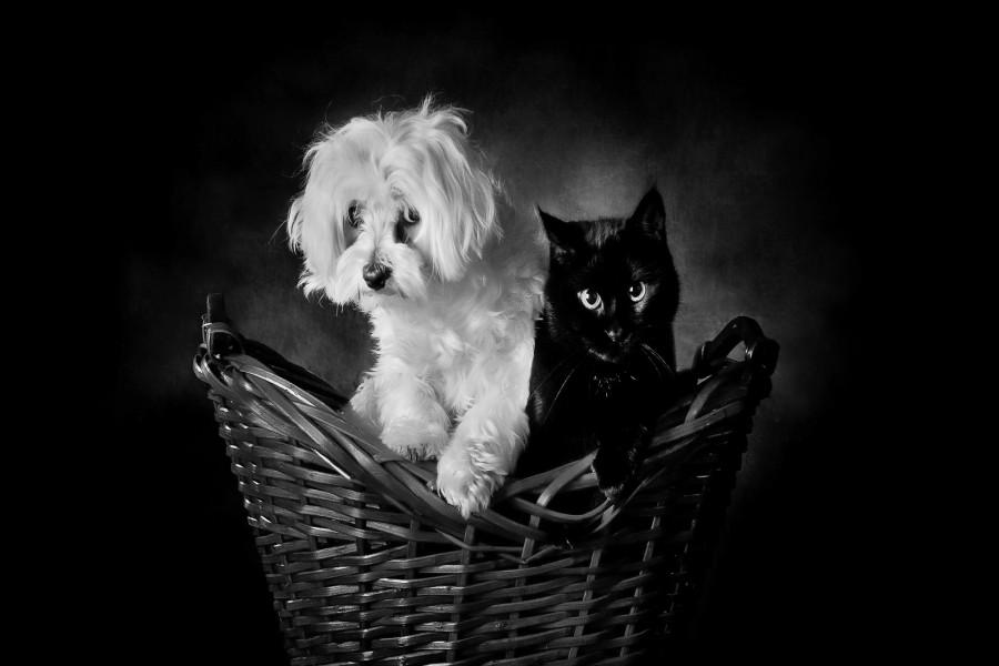 Gato negro y perro blanco sentados en una cesta de mimbre