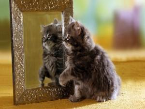 Un gatito mirándose en el espejo