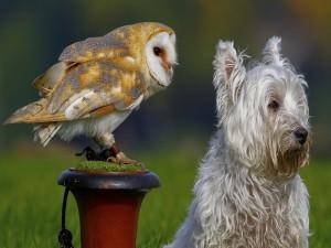 Una lechuza y un perro mirando hacia adelante