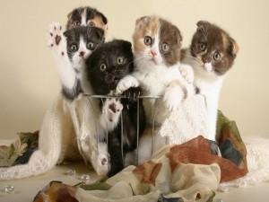 Simpáticos gatitos en una cesta de aluminio