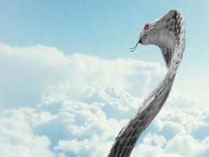 Serpiente con ojos rojos mirando el cielo