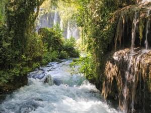 Río torrentoso corriendo entre las rocas y los árboles