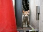 La mirada de un gato callejero