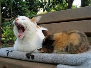 Dos gatos descansando sobre un banco