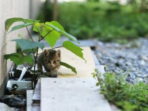 Gatito bajo una planta