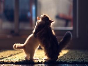 Gatos abrazándose