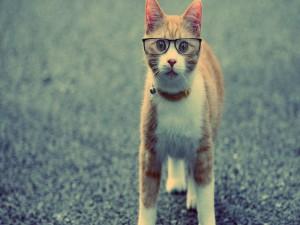 Un simpático gato con gafas