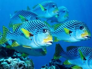 Hermosos peces bajo el mar