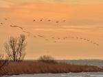 Al alba  las aves acuden al sur