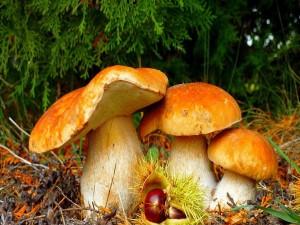 Grandes setas en el bosque