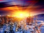 Resplandor del sol sobre los árboles cubiertos de nieve