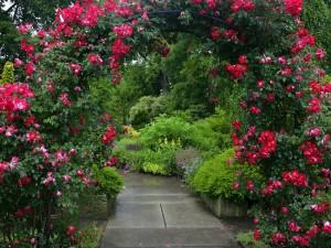 Arco cubierto de rosas