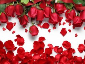 Rosas y pétalos de color rojo