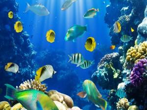 Peces de colores en el fondo del mar