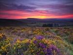Amanece sobre un campo con flores lilas y amarillas