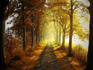 Rayos de sol en el bosque otoñal