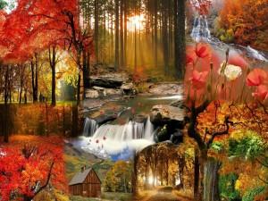 Collage del otoño