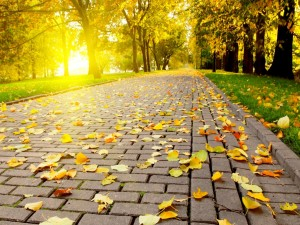 Hojas de otoño en el camino