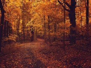 Camino forestal en otoño