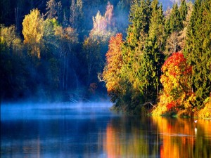 Río brumoso en otoño