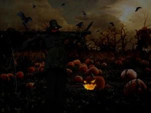 Campo de calabazas en la noche de Halloween
