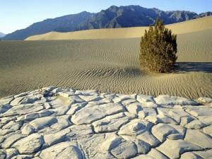 Árbol en el Parque Nacional del Valle de la Muerte