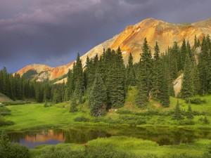Coníferas bajo las montañas