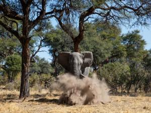 Elefante levantando una polvareda