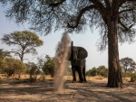 Elefante divirtiéndose con la arena
