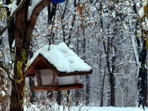 Alimentador cubierto de nieve