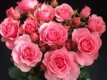 Un ramo de rosas color rosa