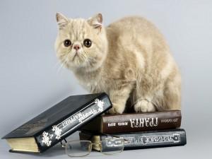 Gatito sentado sobre unos libros