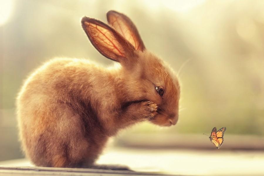 Conejo observando una mariposa
