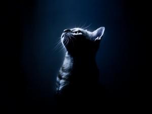 Gato bajo los rayos de luz