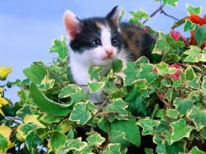Gatito sobre una planta de hiedra