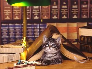 Un gato en la biblioteca