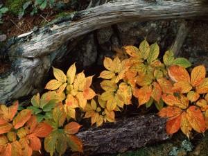 Plantas con los colores del otoño